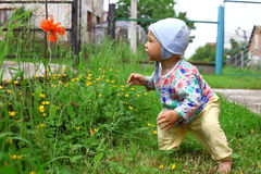 Baby at flower. Baby looking to red flower stock image