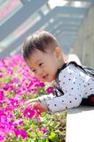 Baby and flower. Baby smelling flowers in spring day Royalty Free Stock Image