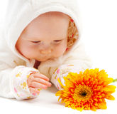 Baby with flower. Baby lying on floor and looking at orange flower stock images