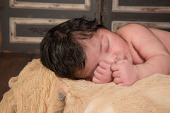 Baby Flower Stock Image