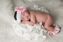Baby Flower Stock Photography