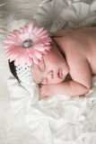 Baby Flower Royalty Free Stock Photo