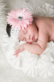 Baby Flower stock image