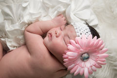 Baby Flower Royalty Free Stock Images