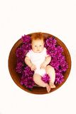 Baby in flowers Royalty Free Stock Image