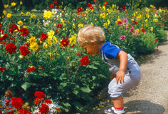 Baby with flowers. Small Boy smelling flowers in park Royalty Free Stock Images