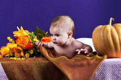 Baby flowers and pumpkins Stock Photo