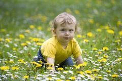 Baby on a flowery meadow. Happy cute baby crawling on a flowery meadow with dandelions and daisies royalty free stock photography