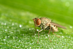 Baby fly Stock Photos