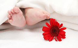 Baby foots with a flower in the foreground Royalty Free Stock Photos