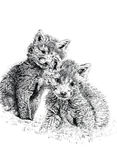 Baby Fox Cubs. Pen and ink hand drawn illustration of a pair of baby fox cubs against a white background. Illustration by marilyna Royalty Free Stock Photos