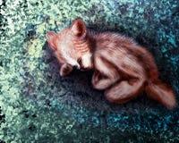 Baby foxy Stockbild