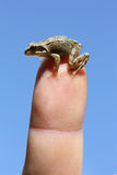 Baby frog. On the top of the human finger against blue sky Stock Image