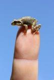 Baby frog Stock Image