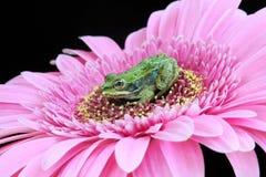 Baby frog Stock Photo