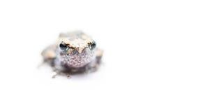 Baby frog isolated focus on eye. Baby frog isolated on white focus on eye stock photo