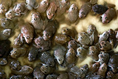 Baby Frogs bar in box. Stock Photography