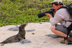 Baby Galapagos sea lion playing with a tourist on North Seymour Stock Image
