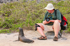 Baby Galapagos sea lion playing with a tourist on North Seymour Royalty Free Stock Image
