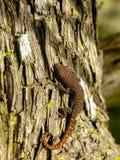 Baby Gecko Stock Photography