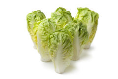Baby gem lettuce Royalty Free Stock Image