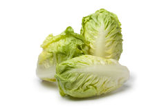 Baby gem lettuce Royalty Free Stock Photos