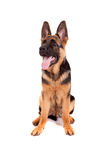 Baby german shepherd Royalty Free Stock Images