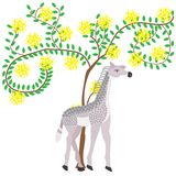 Baby giraffe next to acacia blossom tree, African animals and pl Stock Image