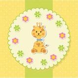 Baby giraffe Stock Image