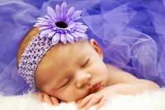 Baby girl. Newborn baby girl sleeping while wearing purple flower bow Royalty Free Stock Photos