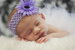 Baby girl. Newborn baby girl sleeping while wearing purple flower bow Stock Photography