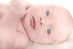 Baby girl age 6 weeks old Stock Photography
