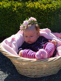 Baby girl in basket. Baby girl in a basket with shrubs in the background royalty free stock image
