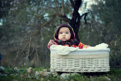 Baby girl in a basket Stock Image