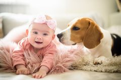 Baby girl with a beagle dog royalty free stock photos