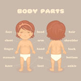 Baby girl body parts. Vector cartoon illustration for kids Stock Images