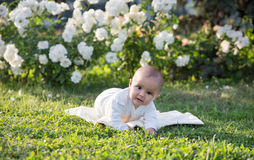 Baby girl crawling on the grass with white flowers Royalty Free Stock Images