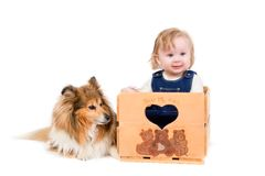 Baby girl and dog. A cute baby girl with a Shetland Sheepdog on white background Stock Image