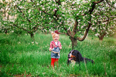Baby girl with dog bern in spring garden Stock Photo