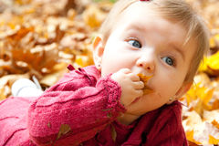Baby girl eating autumn leaves Royalty Free Stock Image