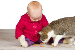 Baby girl with the family cat Stock Image