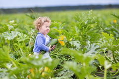 Baby girl on farm field gathering ripe zucchini Stock Image