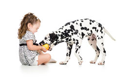 Baby girl feeding dog Stock Photography