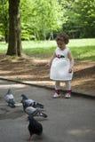 Baby girl feeding pigeons Stock Photos
