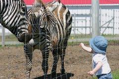 Baby girl feeding zebra Stock Photo