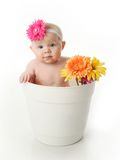 Baby girl in a flower pot. Portrait of an adorable baby girl sitting in a white flower pot along with bright gerbera daisies Royalty Free Stock Photos