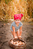 Baby girl on the garden with harvest of potatoes in the basket near field  dry corn  background. Dirty child in red bandana and st Royalty Free Stock Photos