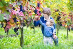 Baby girl and her cute brother in sunny vine yard. Cute laughing brother and baby sister playing together in a sunny autumn vine yard picking ripe fresh grapes Stock Images
