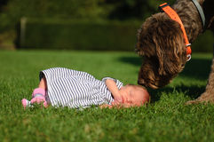 Baby girl with her guardian. Photo of a baby girl with her big dog next to her Stock Photos