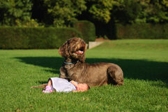 Baby girl with her guardian. Photo of a baby girl with her big dog next to her Stock Photo